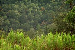 Gras Forest Golden Hour Tropical Background stock afbeelding