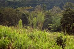 Gras Forest Golden Hour Tropical Background stock afbeeldingen