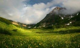 Gras am Fuß des Vulkans stockfotografie