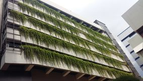 Gras am Gebäude Stockfotografie