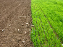 Gras gegen Land Stockbilder