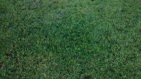 Gras gepflegt lizenzfreie stockfotos