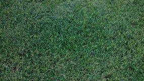 Gras gepflegt lizenzfreie stockfotografie