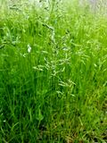 Gras, gerade einfaches altes Gras lizenzfreie stockbilder