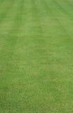 Gras geschnitten mit Streifen Lizenzfreie Stockbilder