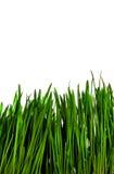 Gras getrennt Lizenzfreie Stockfotos