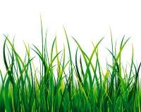 Gras getrennt Lizenzfreies Stockbild