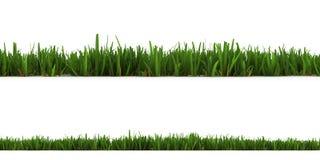 Gras getrennt auf dem Weiß Stockfoto