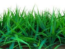 Gras getrennt auf Weiß lizenzfreie stockfotos