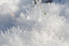 Gras in ghiaccio Fotografie Stock