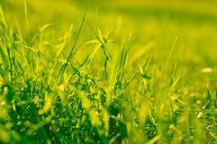 Gras glitzert in der Sonne Lizenzfreie Stockfotos