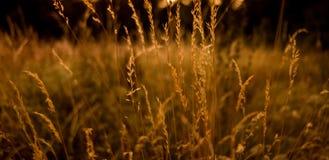 Gras, goldene Stunde lizenzfreies stockfoto