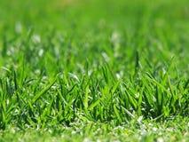 Gras-Grün Lizenzfreie Stockfotos
