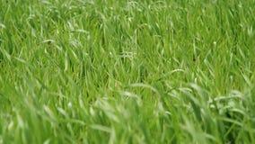 Gras groen gebied stock videobeelden