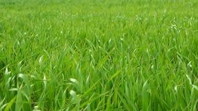 Gras groen landschap stock videobeelden