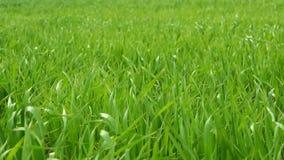 Gras groen landschap stock footage