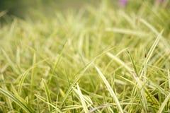Gras groen onduidelijk beeld Stock Foto's