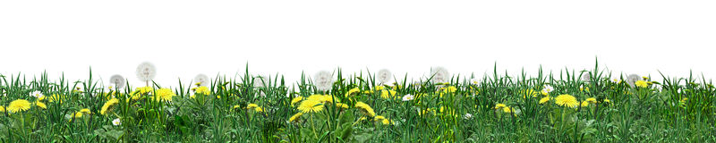Gras groene banner Stock Afbeeldingen