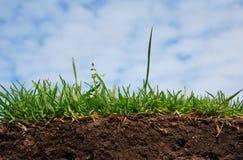 Gras - grond en wortel royalty-vrije stock foto's