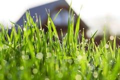 Gras am Haus im Tau lizenzfreies stockbild