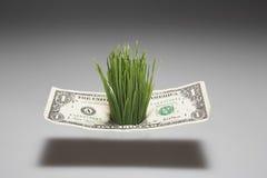 Gras het Groeien door Één Dollarrekening Royalty-vrije Stock Afbeelding