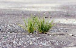 Gras het groeien door de grond Royalty-vrije Stock Foto's