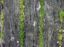 Gras het groeien op oud hout Royalty-vrije Stock Fotografie