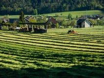 Gras het oogsten op een de lentemiddag Stock Fotografie