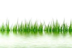 Gras in het water Royalty-vrije Stock Afbeeldingen