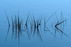 Gras in het water royalty-vrije stock afbeelding