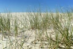 Gras in het zand Royalty-vrije Stock Foto