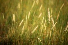 Gras in het zonlicht Stock Foto's