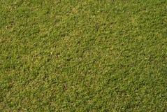 Gras-Hintergrund Stockbilder