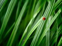 Gras-Hintergrund Lizenzfreie Stockfotos