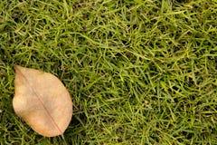 Gras-Hintergrund mit einem trockenen reaf Lizenzfreies Stockfoto