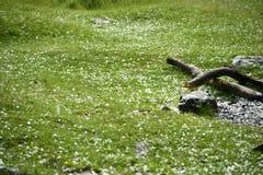 Gras in ijsballen wordt behandeld na hagelonweer dat Royalty-vrije Stock Foto