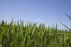 Gras im Detail stockbild