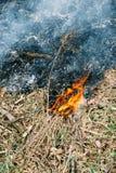 Gras im Feuer stockbilder