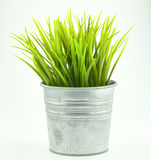 Gras im Flowerpot lokalisiert auf Weiß Lizenzfreie Stockfotos