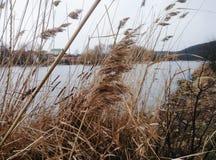 Gras im Fluss Stockbilder