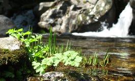 Gras im Fluss Stockfotografie