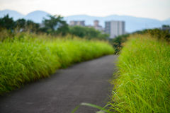 Gras im Frühjahr Stockbilder