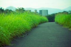 Gras im Frühjahr Lizenzfreies Stockfoto