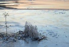 Gras im Frost Stockfoto