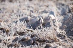 Gras im Frost, Morgenfrost Lizenzfreie Stockbilder