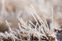 Gras im Frost, Morgenfrost Stockbilder