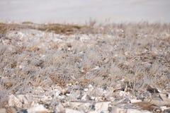 Gras im Frost, Morgenfrost Stockfotografie