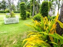 Gras im Garten stockbilder
