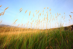 Gras im Grasland Stockbilder