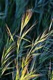 Gras im hellen Tageslicht Lizenzfreie Stockfotografie
